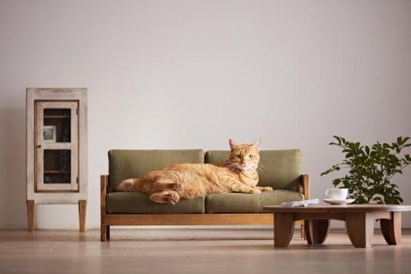 171018nekokagu01 600x400 - 日本の職人が作る猫用家具、ベッドとソファに猫は寛ぐ