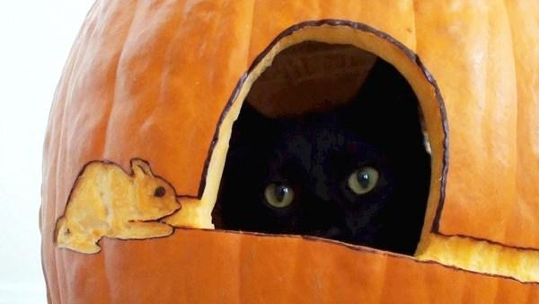 171025catPUMPKIN 600x338 - お手軽細工のかぼちゃランタン、猫が入って見事完成