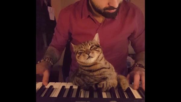 171217catpiano 600x338 - ゆるやかなピアノの調べに眠れる猫、寝落ちてとろけて黒鍵を枕に
