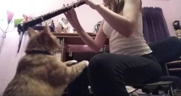 171218catvsoboe 600x319 - 飼い主の奏でるオーボエに手を伸ばす、やめさせようと猫は必死に