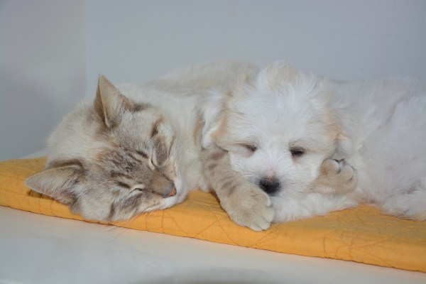 171231catanddog 600x400 - 昨年の飼育頭数推計値、猫が初めて犬を超える