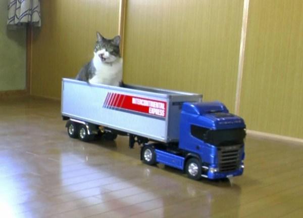 180114SCANIA 600x431 - ラジコンのトレーラーに運ばれる猫、停車するまでおとなしく