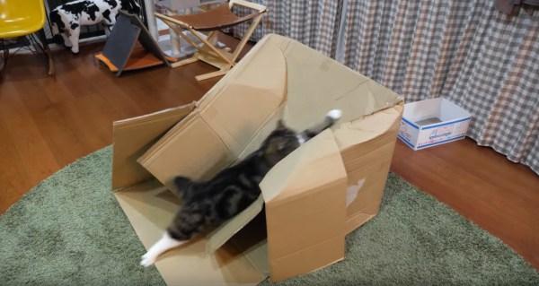 180119maru 600x319 - どうしても箱の上に乗りたい猫、登って潰してすべり台に