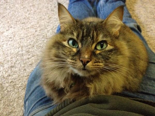 180214cat 600x450 - 本日の美人猫vol.254