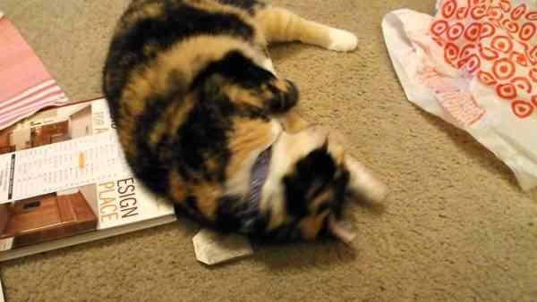 180304cattea 600x338 - 三毛猫怪しむティーバッグ、臭いを嗅いだら酔っ払い
