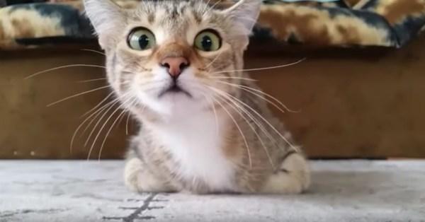 180503cat 600x314 - ホラー映画に見入る猫、その不穏な動きで恐怖を伝える