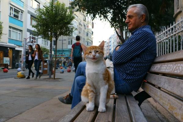 180514smilecat 600x400 - 猫愛好国・トルコの猫の写真展、入場無料で渋谷で21日まで開催