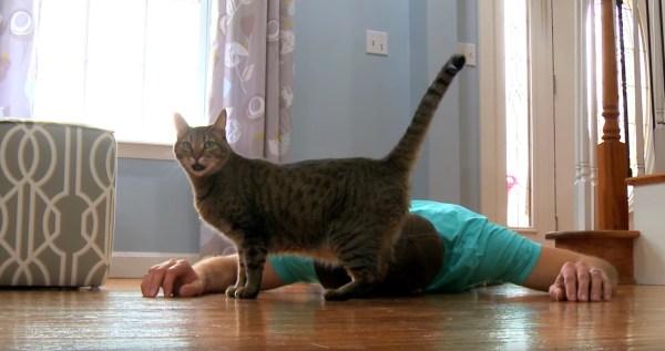 180523cat 600x317 - 死んだふりした飼い主を見つめる猫、それじゃ僕もと隣でゴロン