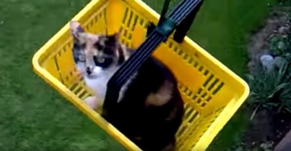180623cat 600x312 - 黄色いカゴの三毛猫専用エレベーター、慣れた足取りでベランダに帰宅