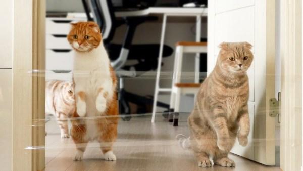 180717cats 600x338 - 猫と人との運動不足の解消に、透明テープでジャンプを誘発