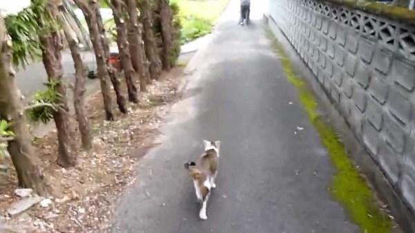 180801cat 600x338 - 婆ちゃんの後追う夏の散歩道、てくてくゆらゆら猫は歩むよ