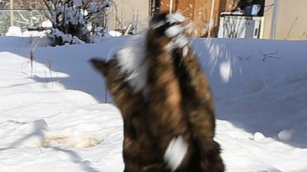 180821cat 600x338 - サビ猫受けるよ千本ノック、雪の白球追いかけて