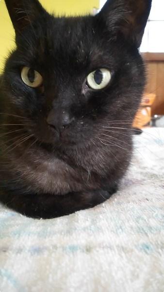 180921cat 338x600 - 本日の美人猫vol.285