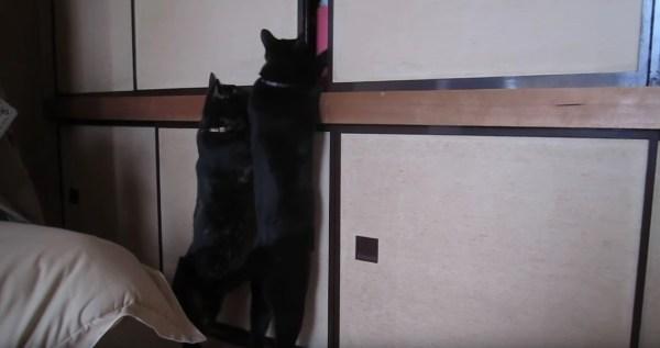 181008cat 600x317 - 次々と黒猫吸い込む漆黒の闇、奥に光るは2つの猫の目