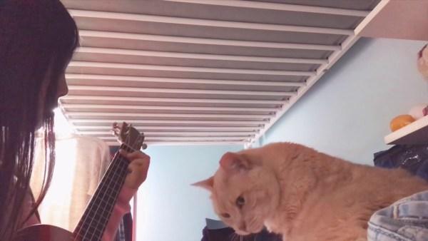 181017cat 600x338 - ウクレレの優しい音色に聞き惚れる猫、心地よすぎて睡眠態勢へ