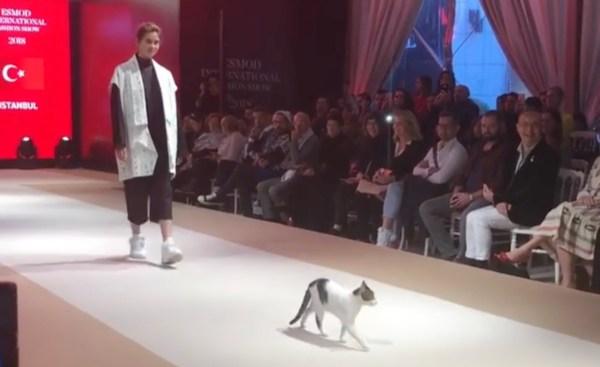 181028cat 600x367 - ファッションショーに猫が進入、モデル気取りでキャットウォークをキャットウォーク