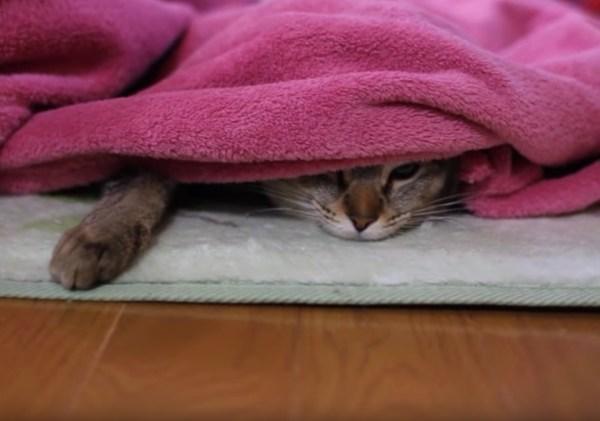 181102cat 600x421 - 「遊びたい」と「温もりたい」を両立する猫、目付きは鋭く動きはやんわり