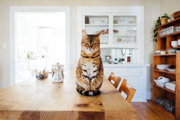 181201cat 600x400 - 本日の美人猫vol.295