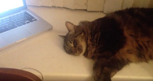 181203cat 600x317 - 猫専用リラックスミュージック、効果の程は猫の顔から