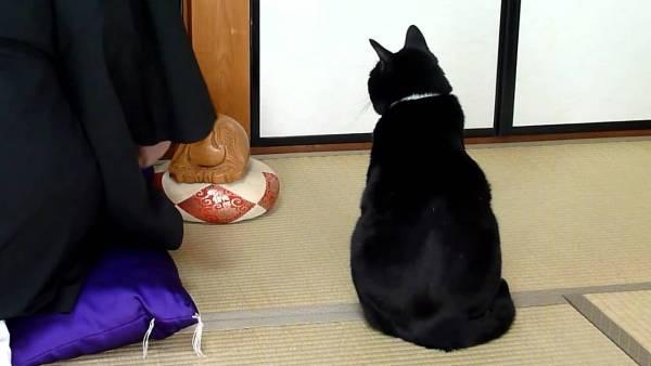 190114cat 600x338 - 黒衣の僧の横で佇む黒き猫、木魚の音にも惑わず端座で
