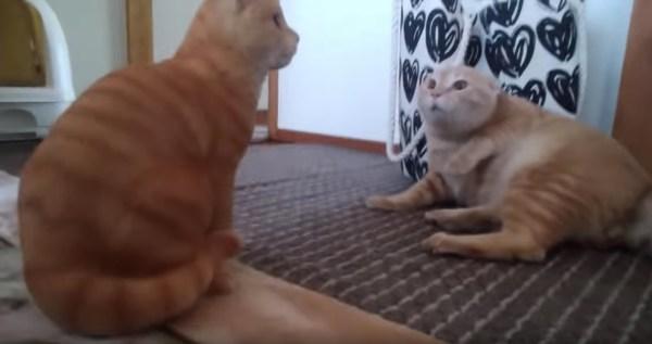 190204cat 600x317 - 置物猫の無言の行に完敗する猫、気圧されわななき腰抜かす