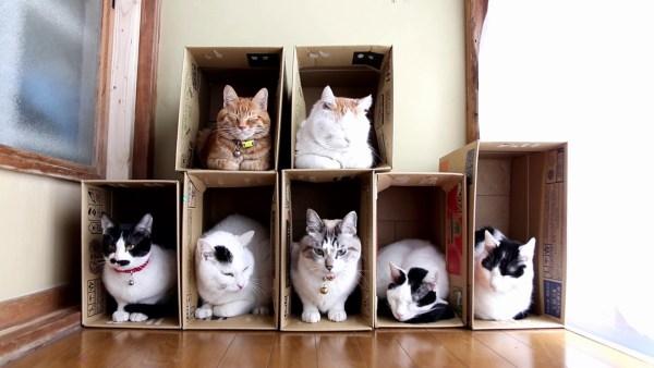 190325cat 600x338 - 2階建て7部屋紙製猫ハウス、最後まで居座るのはどの部屋か