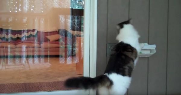 190415cat 600x317 - 鳴き声も上げずに窓開ける猫、チャイムのメロディなぜかあの音