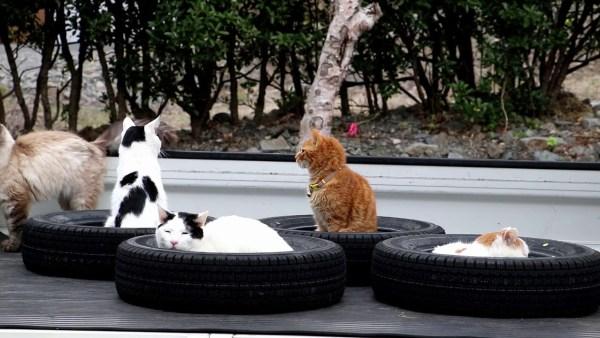 190606cat 600x338 - 猫を吸い込むブラックなホール、古タイヤの穴すべて満席