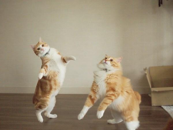 約600枚から選び抜かれたTOP22の猫写真展、「ねこにすと9」が6月15日から