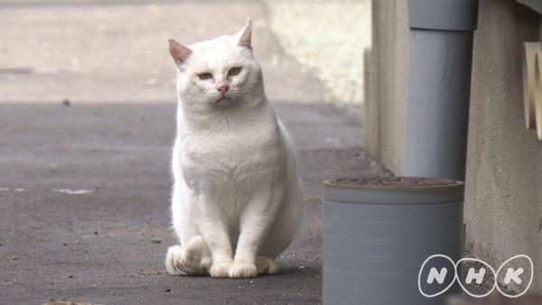 ゼロ打ち前に猫スペシャルの40分、「ダーウィンが来た!」猫大特集第三弾