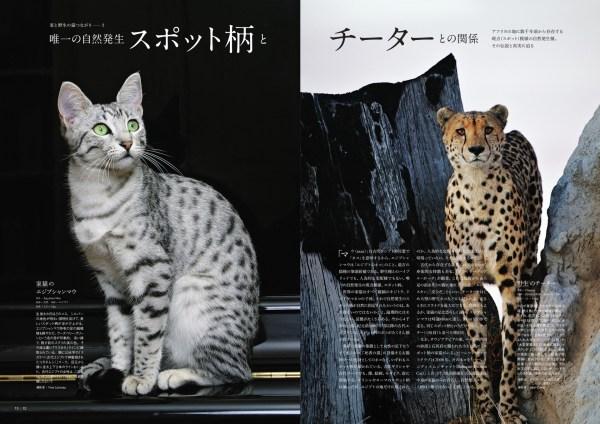 ページめくれば猫の知識の泉湧く、夏休みの猫分補給にこの一冊