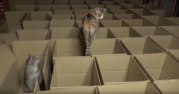 段ボール箱で満たした部屋に大興奮、猫は遊ぶよ上から下から