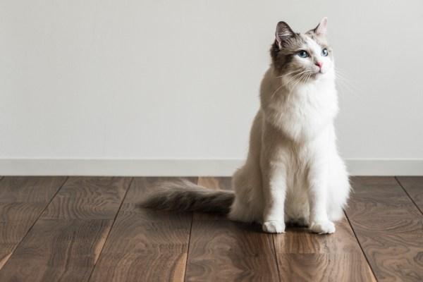 溝が浅く掃除しやすいヒノキの床板、猫の姿も映え映えしく