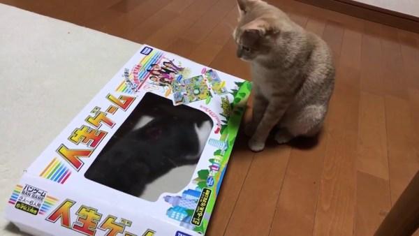 人生の枠をはみ出し遊ぶ猫、自由な生き方見せつける