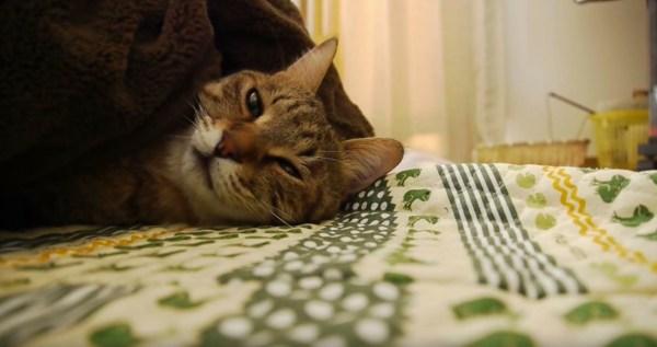猫が寝る場所がどこかは顔見りゃ歴然、誘われる先は夢の最果て