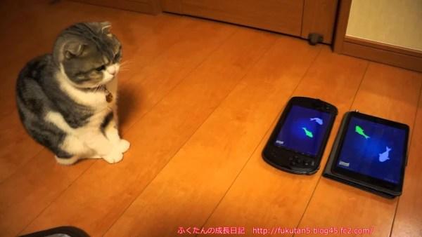 200209cat 600x338 - 2次元の猫向けアプリを凝視する猫、飛びつく先は次元を超えて