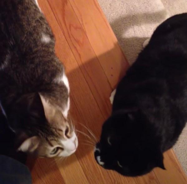 200806cat 600x593 - 2か月ぶりに帰宅の飼い主を見た猫たち、顔を見合わせ一瞬怪しむ