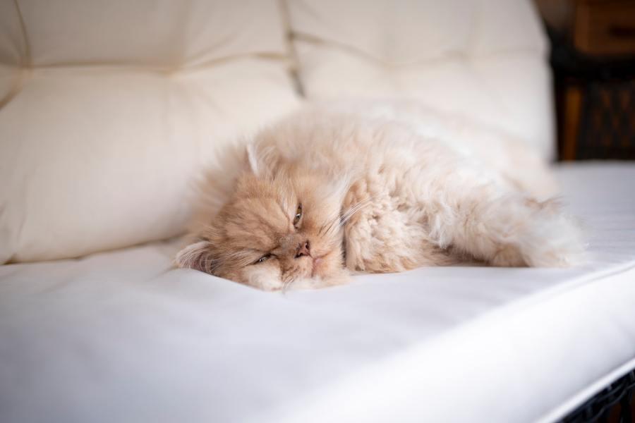 201016cat 1024x683 - 本日の美人猫vol.392