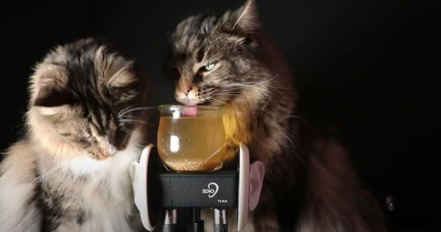 耳の中で猫が棲んでる感覚になる、猫舌ASMR盛り合わせ