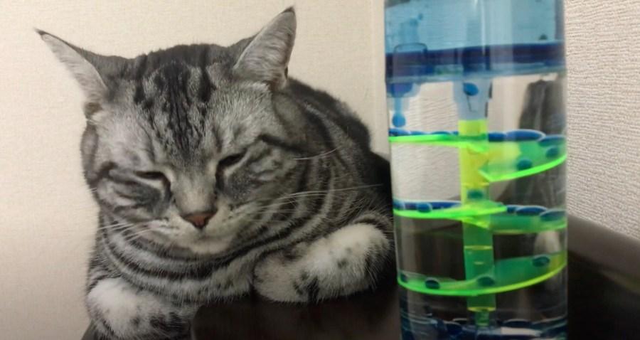 210109cat 1024x544 - 浮かぶあぶくと落ちる雫を見つめる猫、オイルタイマーに眠気を誘われ