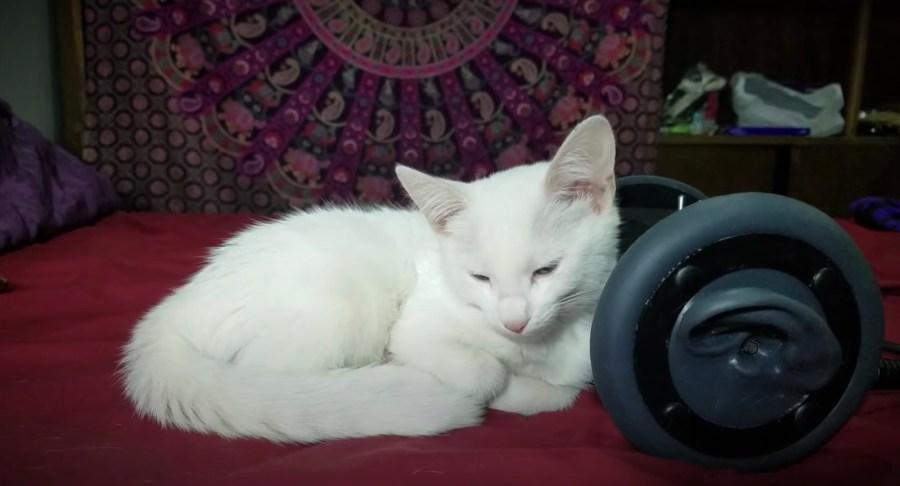 210123cat02 1024x553 - 白猫の側に共寝の60分、たっぷりゴロゴロASMR