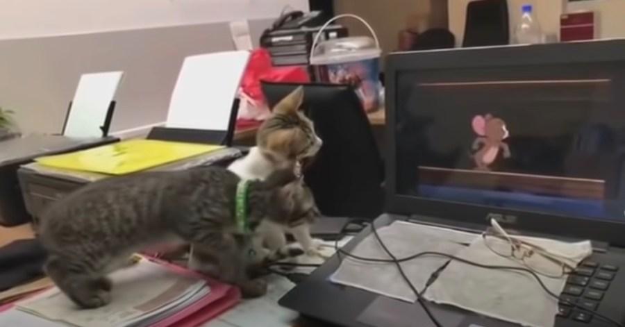 210308cat 1024x536 - 二次元の伝統的なアニメ絵でも、ネズミにはちゃんと反応する猫