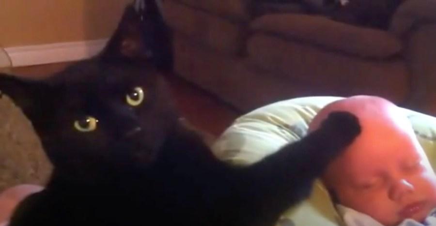 210518cat 1024x531 - グズる赤子に立ち向かう猫、寝つかせ成功ドヤ顔を見せる