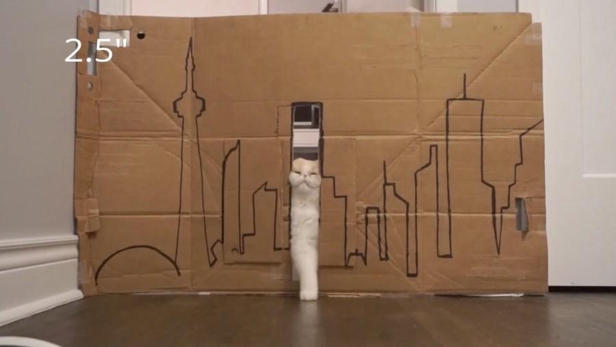 スリット通過に失敗した猫、相方通過し驚愕の顔
