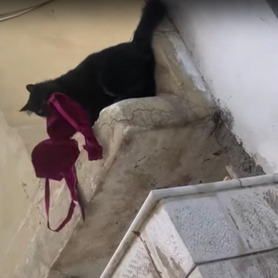 210927cat 1024x1024 - 飼い猫が誰かのブラを咥えてると、隣人からの動画で知らされ