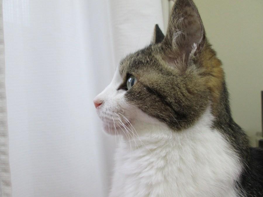 210930cat 1024x768 - 本日の美人猫vol.441