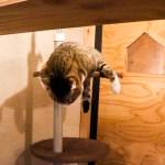 ネコリパ4Fで寝ている猫