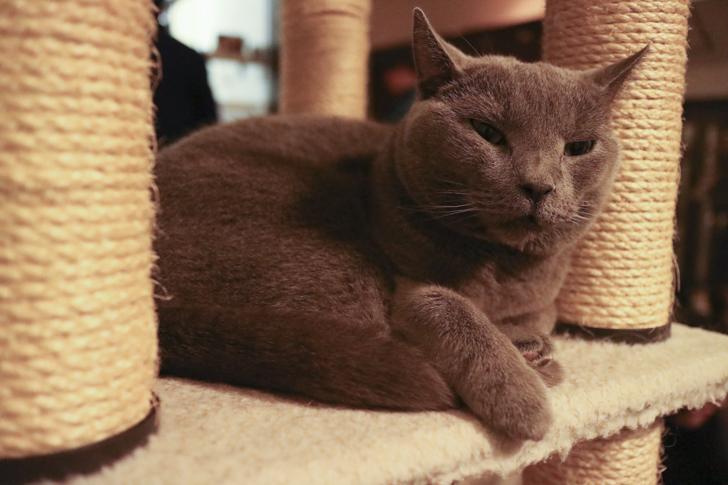 きゃりこの猫