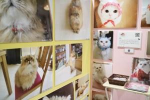 猫写真の展示