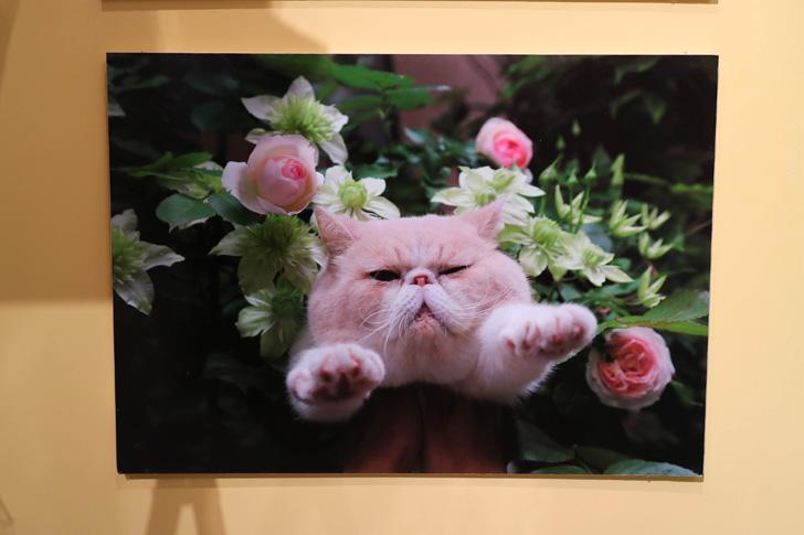バラの中に猫
